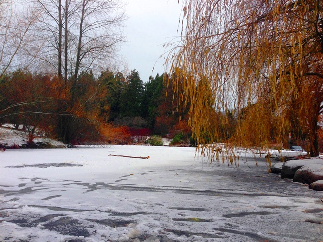 Frozen duck pond Vancouver, British Columbia Canada