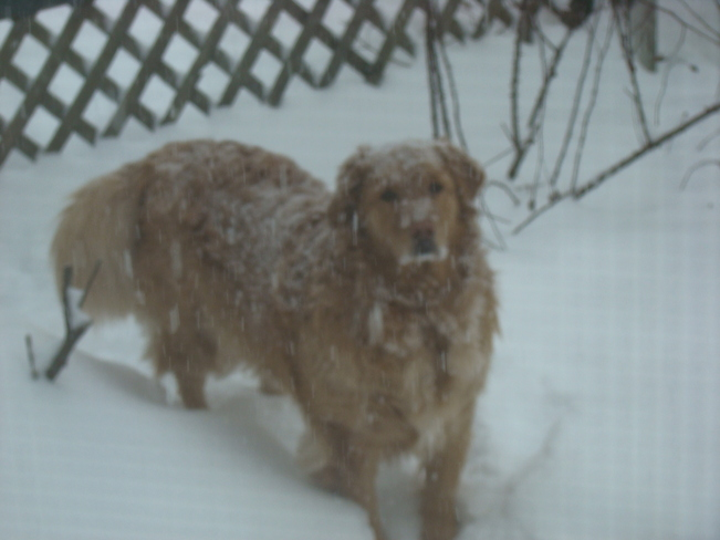 Farley In the Snow Lower Sackville, Nova Scotia Canada