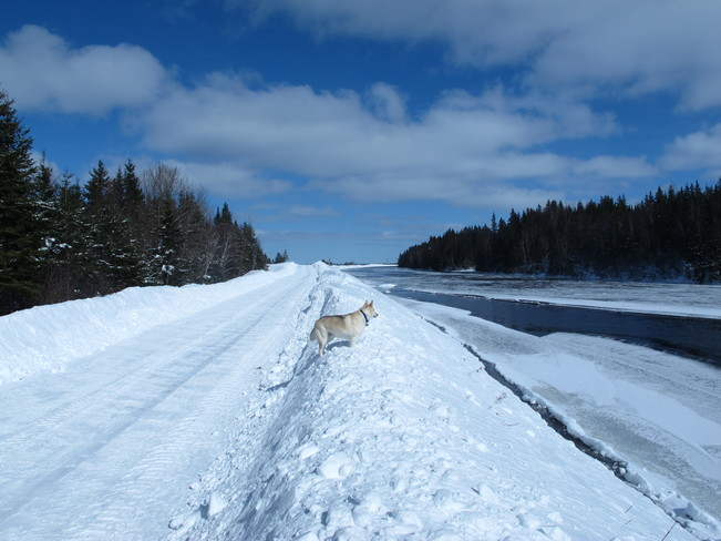 The Canal Banks Deer Lake, Newfoundland and Labrador Canada