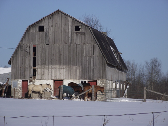 Weathering the Winter Frankville, Ontario Canada