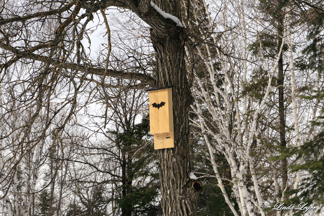 The Bat Box Pinawa, Manitoba Canada