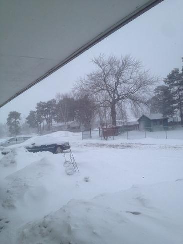 blizzard Simcoe, Ontario Canada
