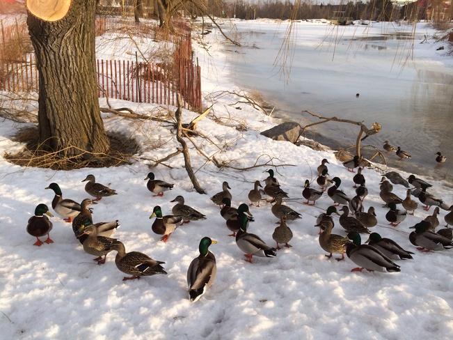chinguacousy park Brampton, Ontario Canada