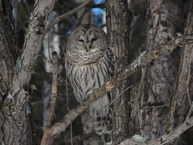 Whoooo are you looking at ?? Lively, Ontario Canada