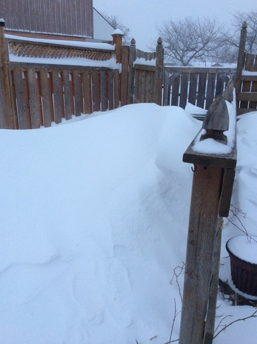 Snow nearly over fence Stoney Creek, Ontario Canada