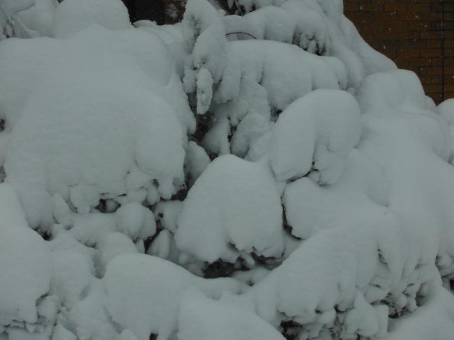 Snow covered Hamilton, Ontario Canada