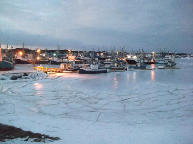 Longliners frozen in the ice in Catalina harbour. Catalina, Newfoundland and Labrador Canada