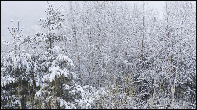 View from my window after the snow. Elliot Lake, Ontario Canada