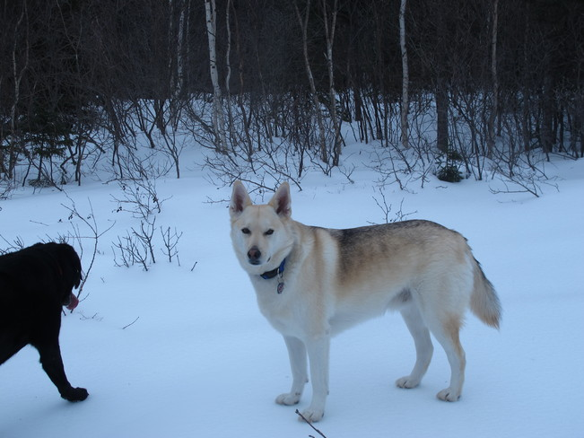 Bandit and Jersey Deer Lake, Newfoundland and Labrador Canada