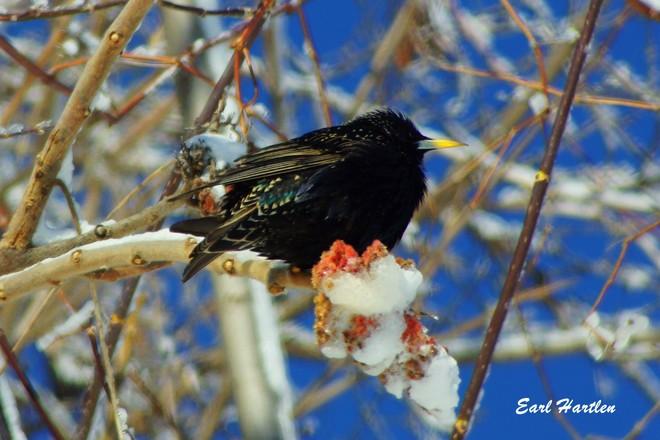 Sun basking Bird Simcoe, Ontario Canada