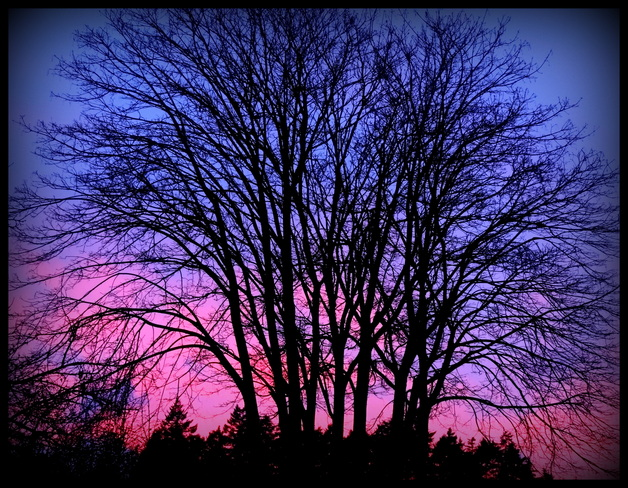 Sunset tree Royston, British Columbia Canada