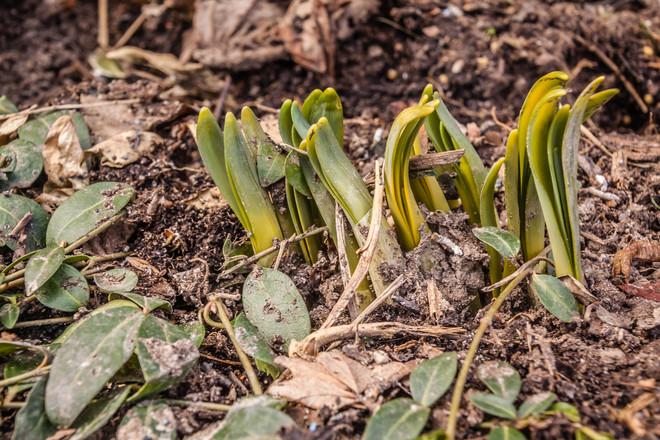 Spring Soon? Niagara Falls, Ontario Canada