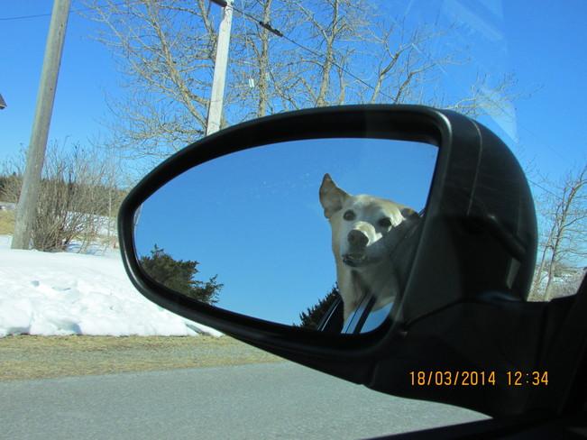 COOPER OUT FOR A DRIVE.. :) Joggins, Nova Scotia Canada