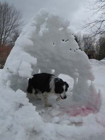 Sun damaged Igloo Doghouse Kingston, Ontario Canada