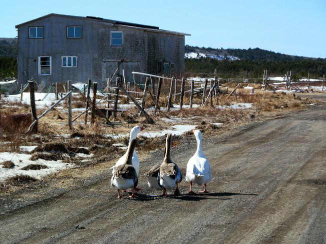 Elaine Strong Grand Bank, Newfoundland and Labrador Canada