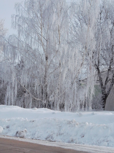 Hoar Frost !! Eriksdale, Manitoba Canada