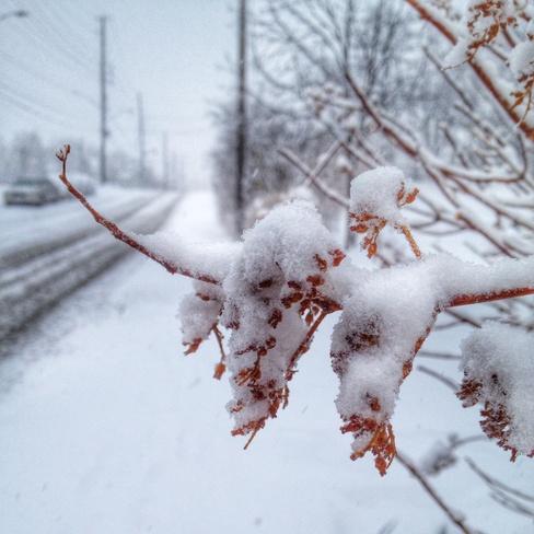 Snowy Streetville Streetsville, Ontario Canada