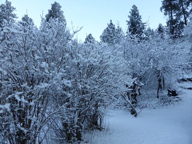 Winter again Vernon, British Columbia Canada