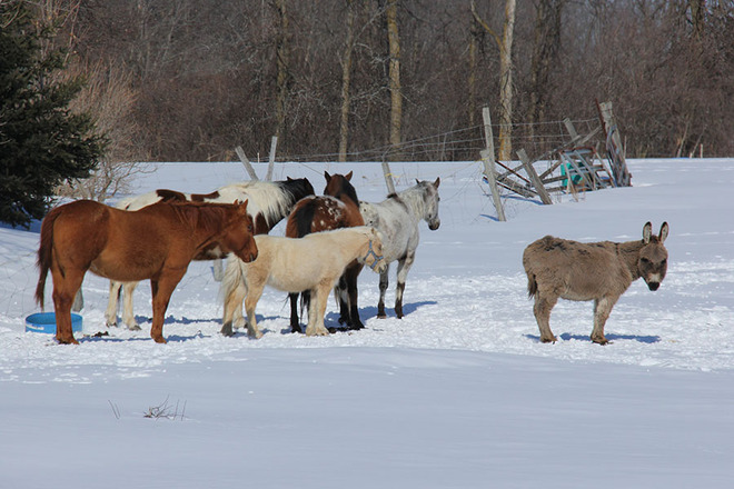 Ever feel like you are not part of the herd? Ottawa, Ontario Canada