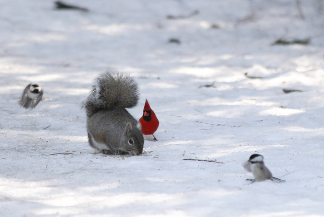 Cardinal calls in for reinforcements! Kingston, Ontario Canada