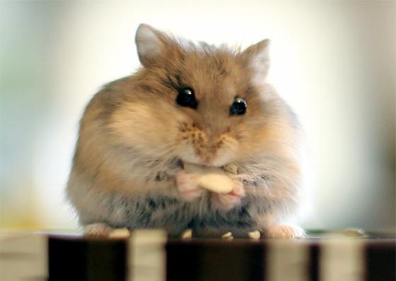 hamster mobile.com