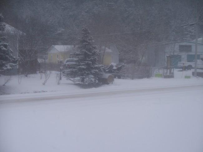 snowy day. Placentia, Newfoundland and Labrador Canada