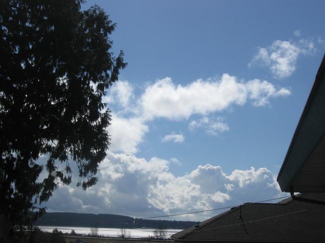 rising up ... --- ''' Surrey, British Columbia Canada