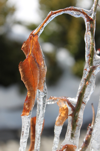 Frozen Branch Collingwood, Ontario Canada