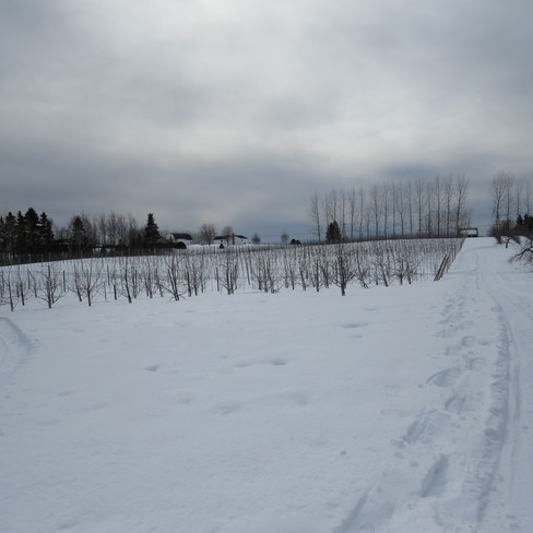 Belliveau Orchards in the winter Memramcook, New Brunswick Canada