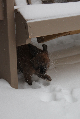 Rabbit Bedford, Nova Scotia Canada