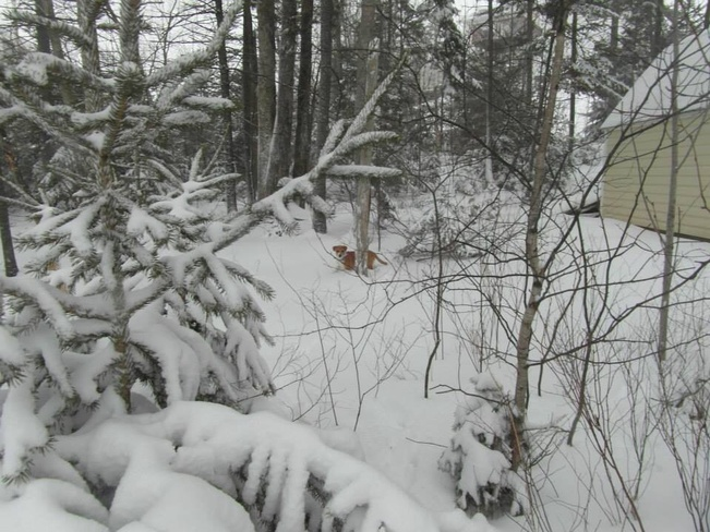 Puppy in the snow Lower Sackville, Nova Scotia Canada