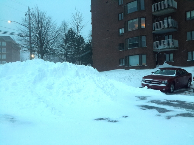 All from today Bedford, Nova Scotia Canada