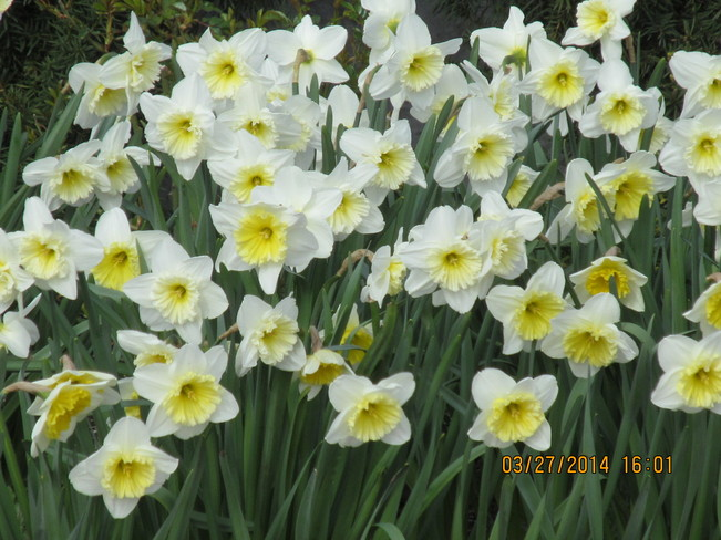 Spring flowers White Rock, British Columbia Canada