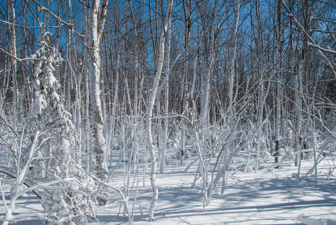 a magical forest the day after the storm. Grande-Digue, New Brunswick Canada