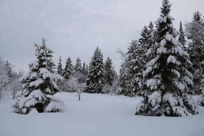 snow day Sault Ste. Marie, Ontario Canada