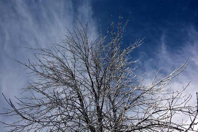 Ice covered tree - April 1st, 2014 Moncton, New Brunswick Canada