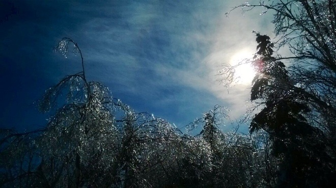 Icy trees glisten in the afternoon Sun. Membertou 28b (Sydney), Nova Scotia Canada