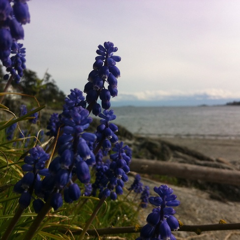 flowers at the beach Saanich, British Columbia Canada
