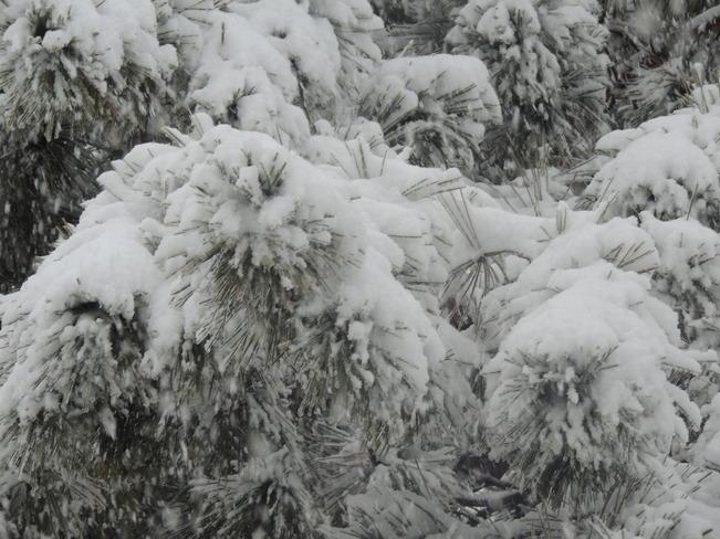 Snowy day Blezard Valley, Ontario Canada