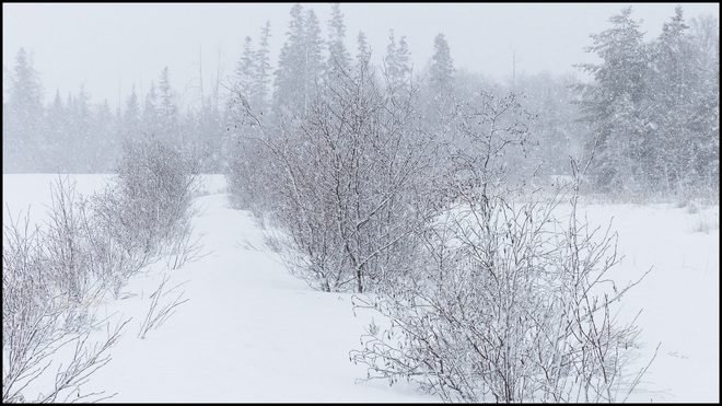 Sheriff Creek, snow covered path. Elliot Lake, Ontario Canada