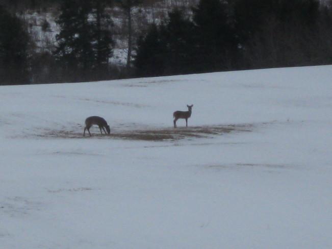 deer Pomquet, Nova Scotia Canada
