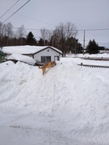 Cassidy's Climbing Snow Mountain Sioux Lookout, Ontario Canada