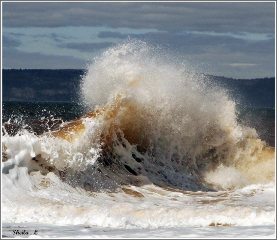 Spring Waves Canning, Nova Scotia Canada