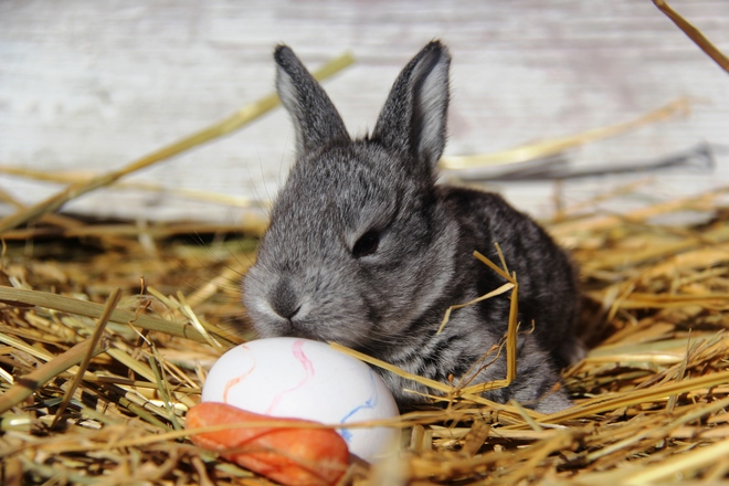 Happy Easter! Rosebud, Alberta Canada