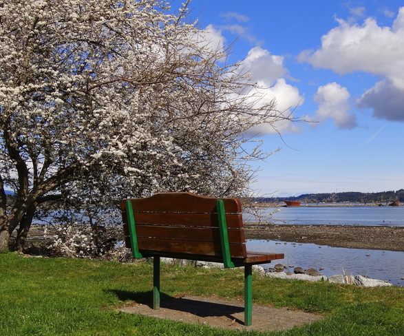 Sit here and feel the Spring! Royston, British Columbia Canada