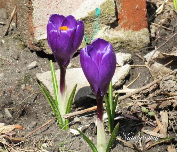 Le printemps Montréal, Quebec Canada