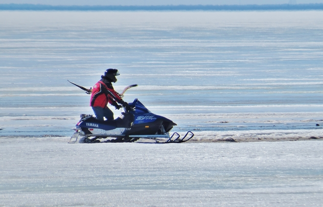 Snowmobiling not appreciated by Geese! North Bay, Ontario Canada