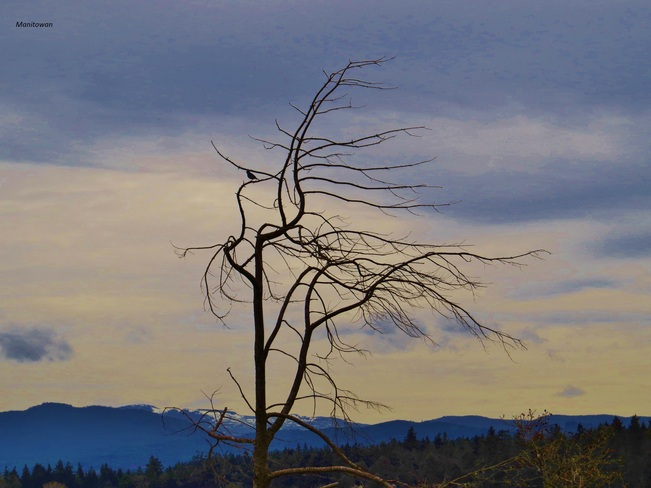 Windswept Parksville, British Columbia Canada