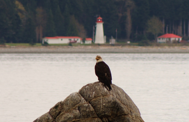 Lighthouse Beacon Shines On Eagle Campbell River, British Columbia Canada