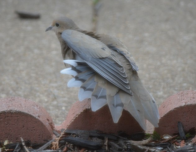 My Plumage! St. Catharines, Ontario Canada